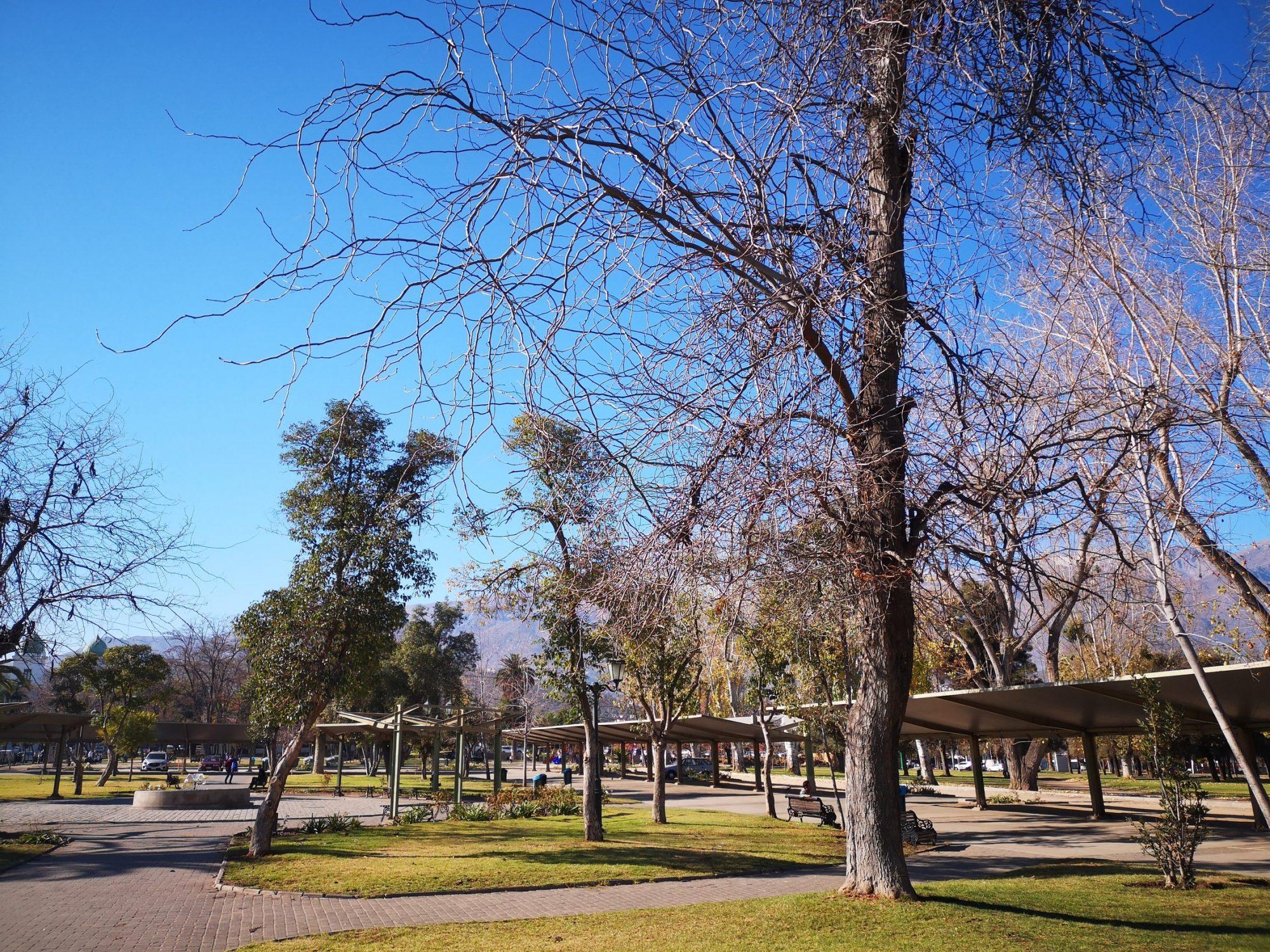 Conseils pour bien prendre soins des arbres